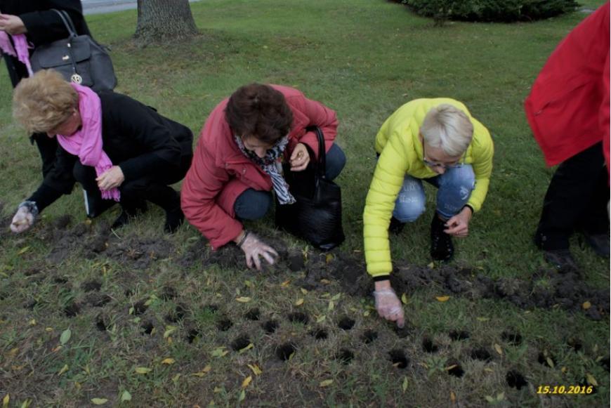 panie z Klubu Amazonek sadzą cebulki żonkili pod Urzędem Marszałkowskim.